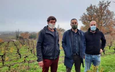 Quelles solutions pour lutter contre le réchauffement climatique dans les vignes ?